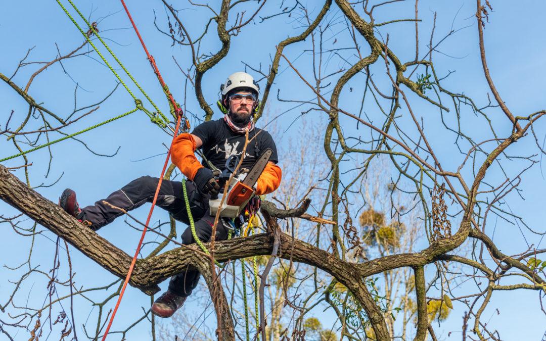 Guide pratique sur l'entretien des arbres de son jardin